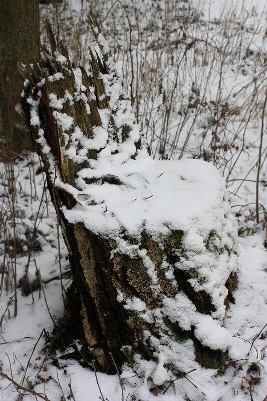 Пень-стульчик в снегу