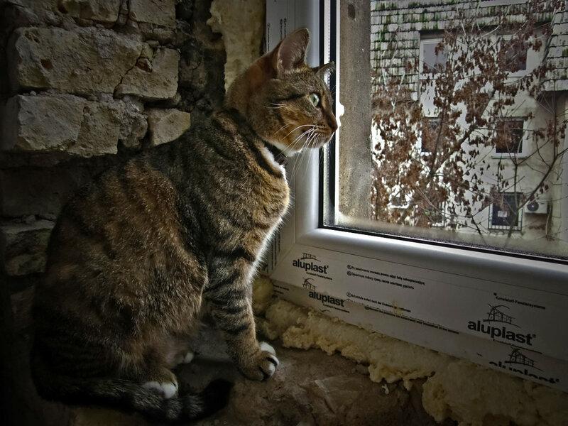 У нового окошка, опять сидела кошка....
