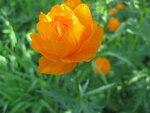 Яркие краски нашего сада!