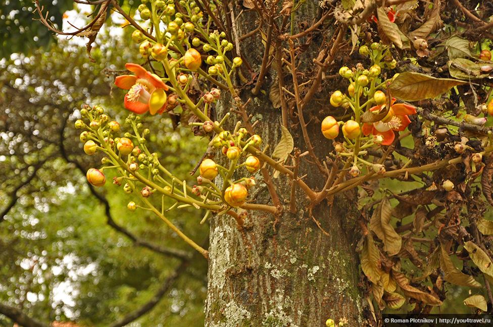 0 168b38 ff21a39d orig День 192 200. Хардин Ботанико, прощальная вечеринка на крыше в Медельине и перелет в Боготу