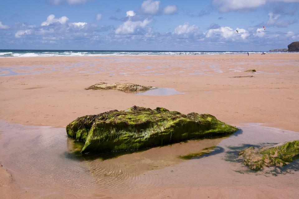 Растения мало кого пугают, и морскими водорослями сегодня никого не удивишь. Вряд ли эти гигантские