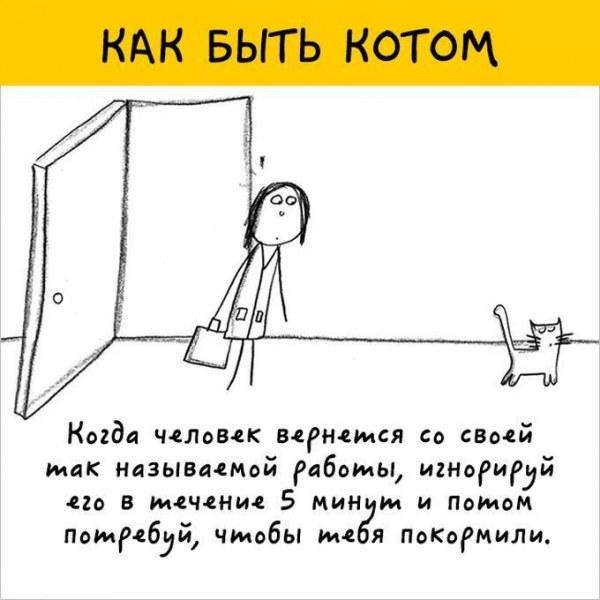 12 рекомендаций как быть котом