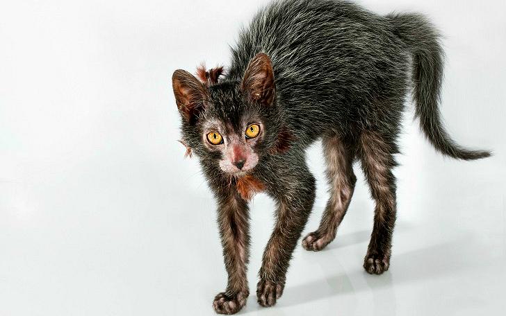 Коты-оборотни (13 фото)