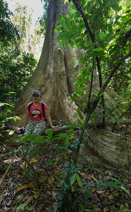 Фотография 21. Отдых в Таиланде. Отчет о поездке на Краби. Сравни масштабы (800, 14, 8.0, 1/25)