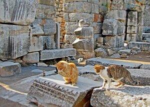 Кошки Эфеса
