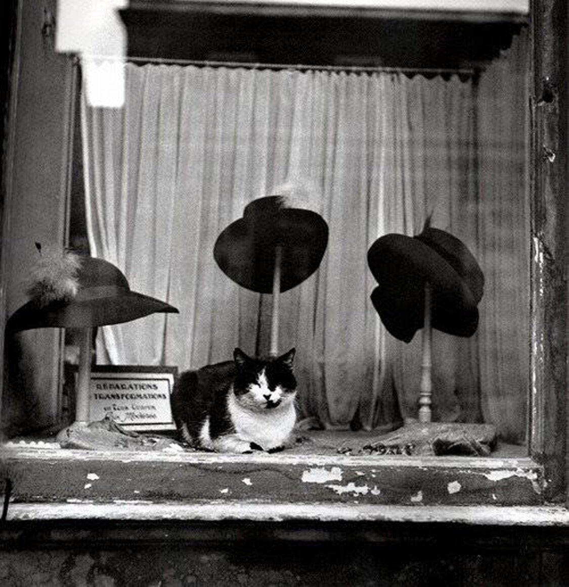 1937.  Кот в мешке