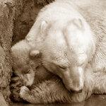 спи, моя радость, усни...