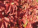 Осень-51.jpg