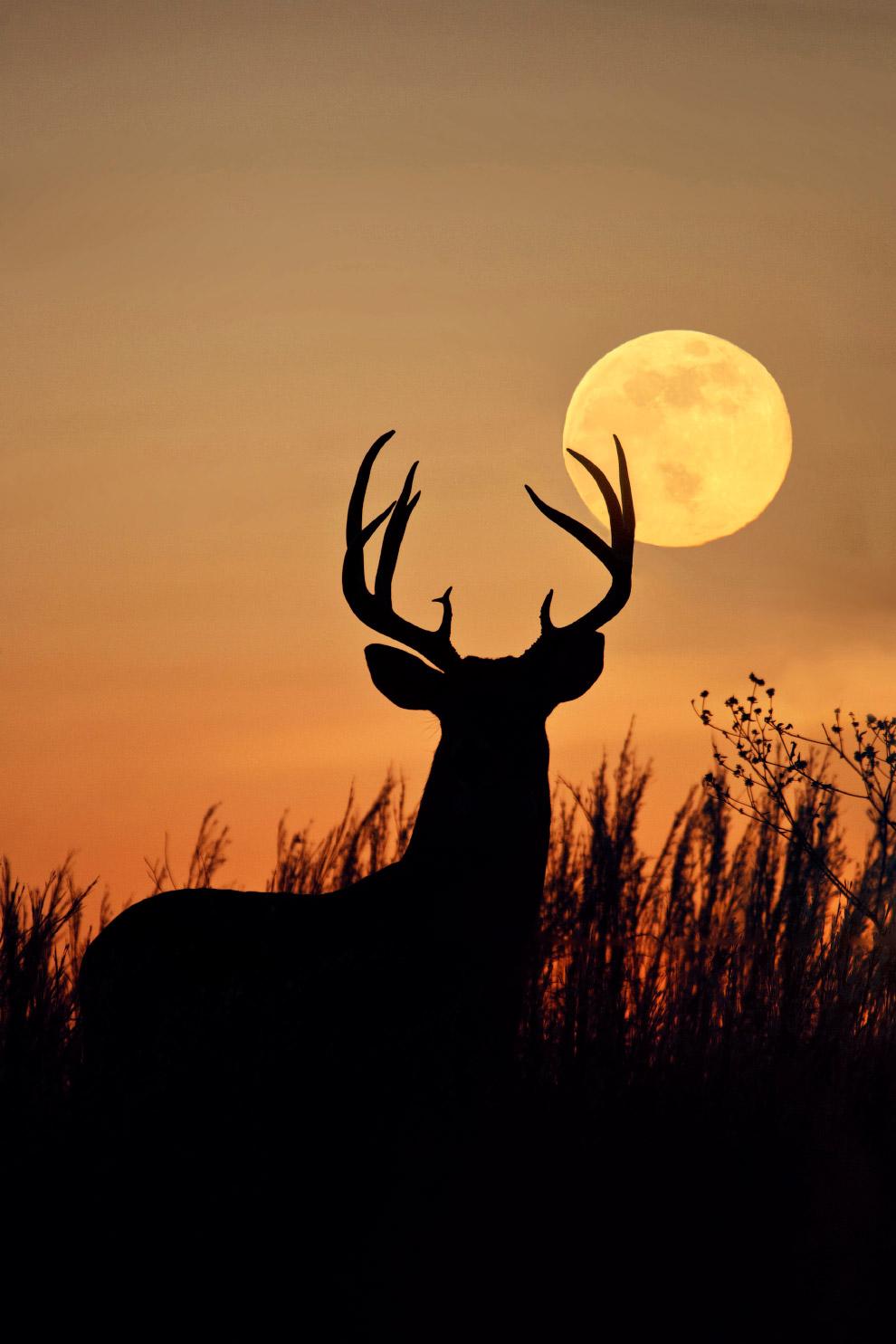 12. Антилопа гну в Кении, Африка.