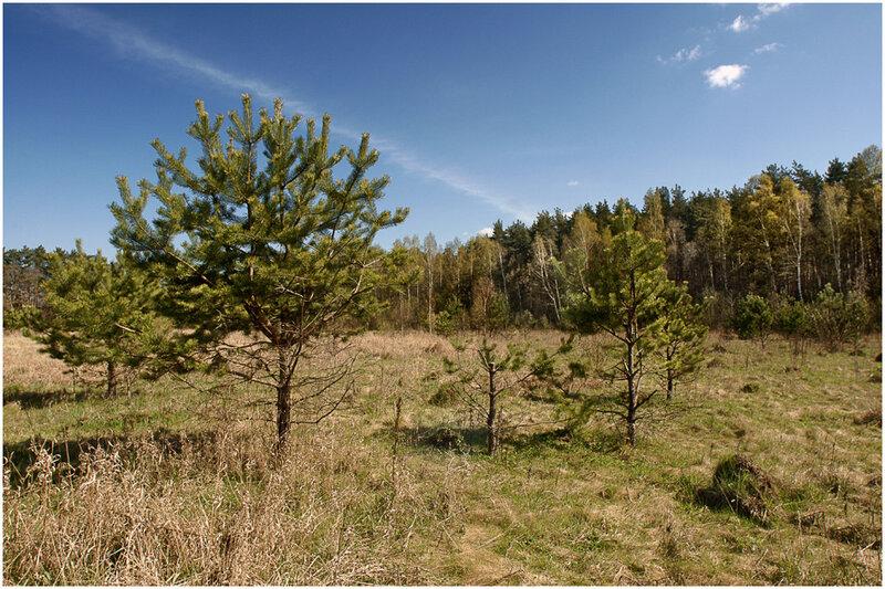Природа. Фотографии весенних видов России