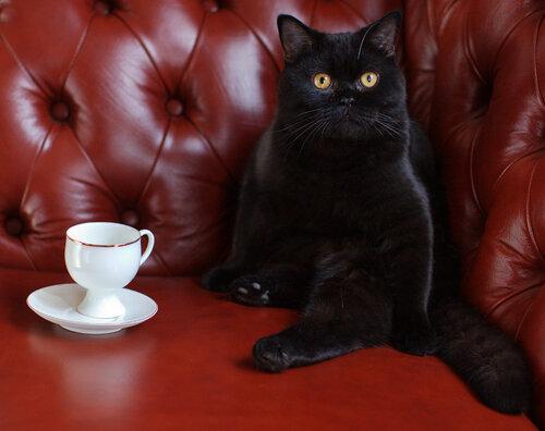 Не пил я ваш кофе