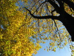 Осень-48.jpg