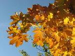 Осень-54.jpg