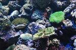 кораллы 1