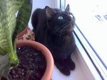 Муся наблюдает за птичками