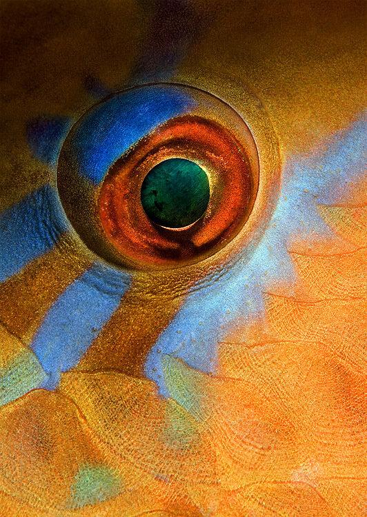 Andrey Narchuk.Fish eyes .Глаза рыб