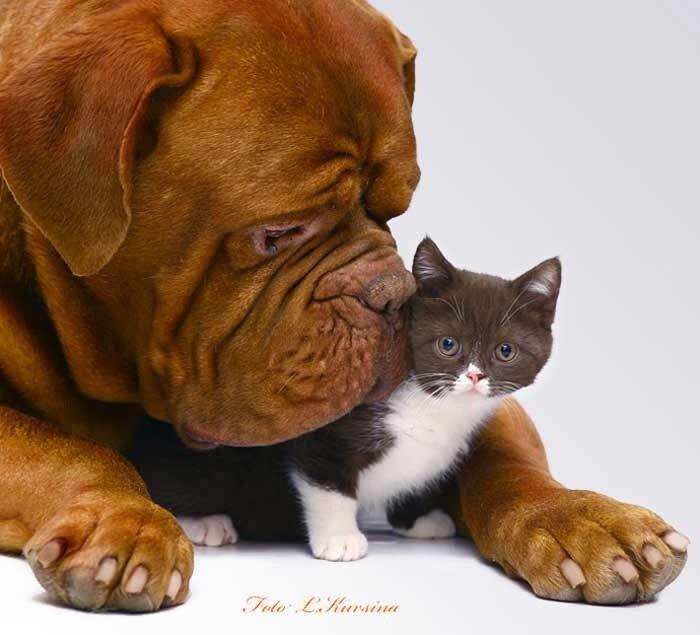 прикольные животные,собаки