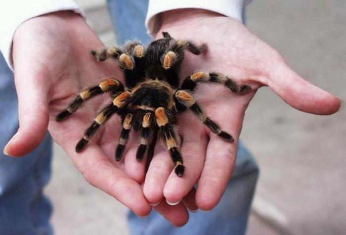 11 безвредных животных, которых люди боятся до смерти