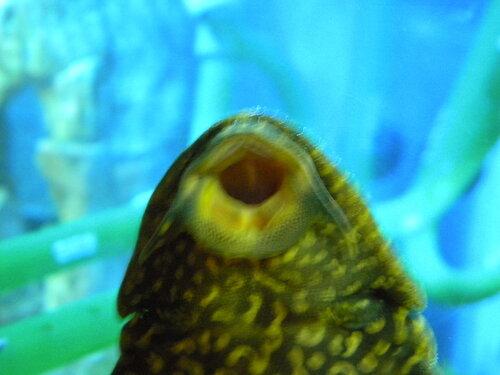 Поцелуй рыбки*