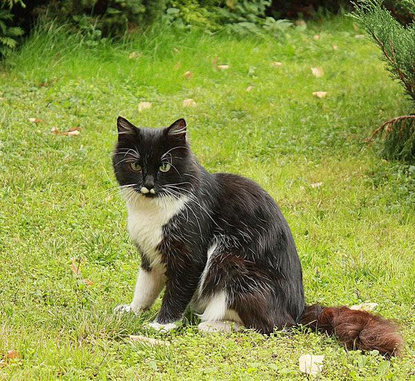У Лукоморья кот учёный...