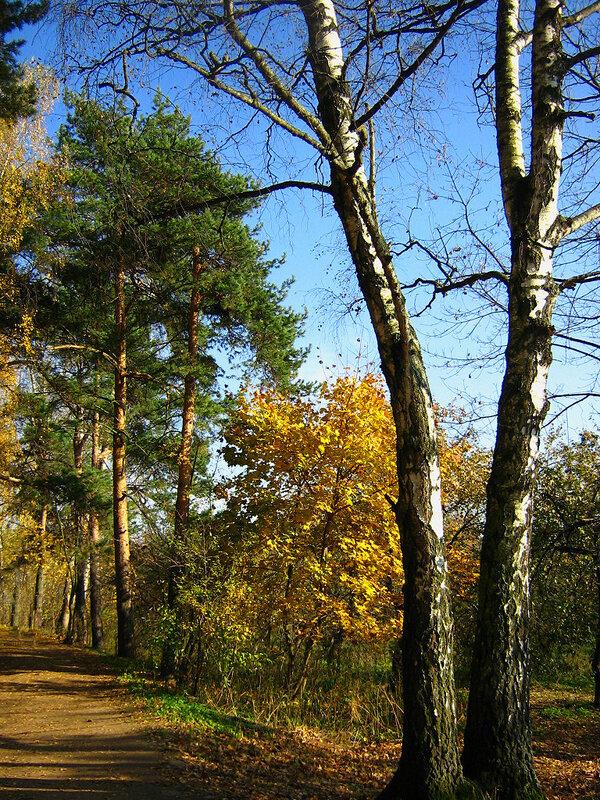 Осень у берез
