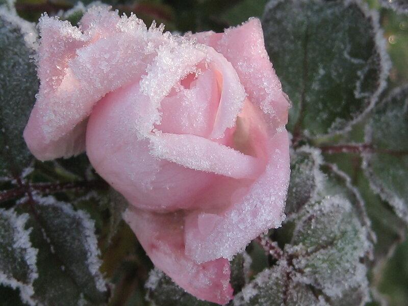 Замороженная красота 3