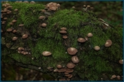 http://img-fotki.yandex.ru/get/4005/15842935.13e/0_d08d6_fa50bcc6_orig.jpg