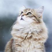 Сонник Кот, к чему снится Кот во сне видеть