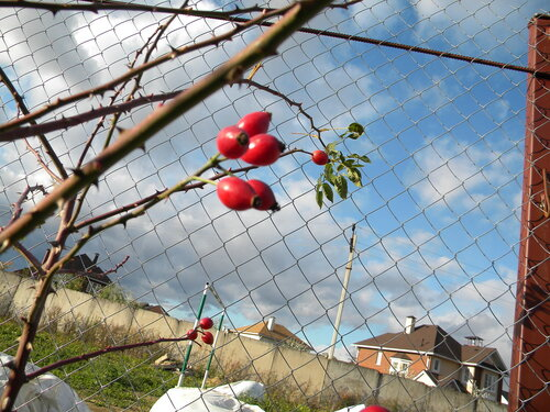 За ягодами