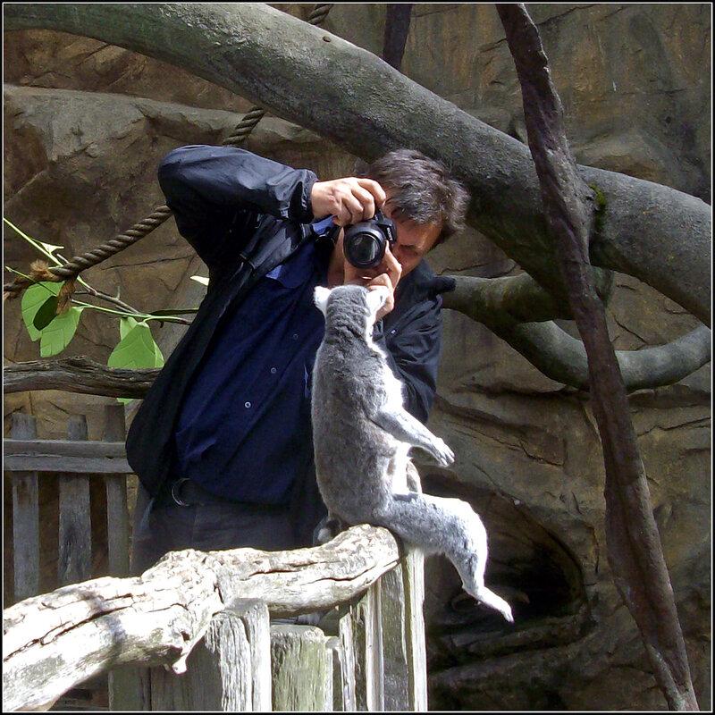 """""""Ты сними , сними меня фотограф .....""""        или       День Лемура на ЯФ !!!!!!!!!"""