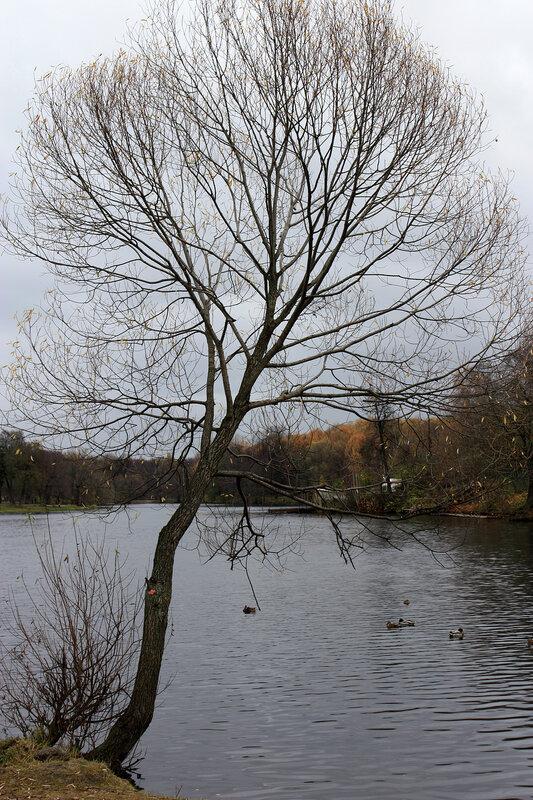 Изящное деревце у пруда