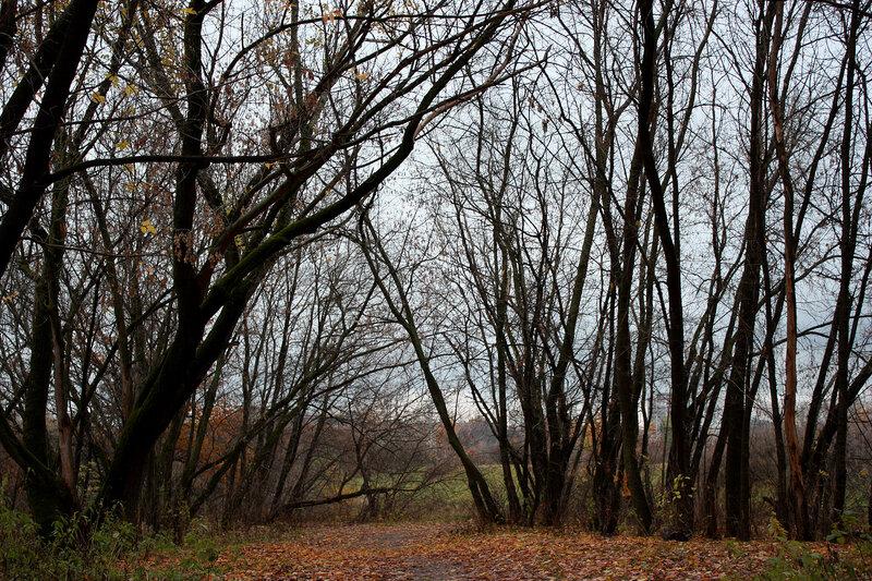 У лесенки и входа в парк