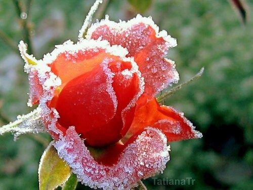 Замороженная красота