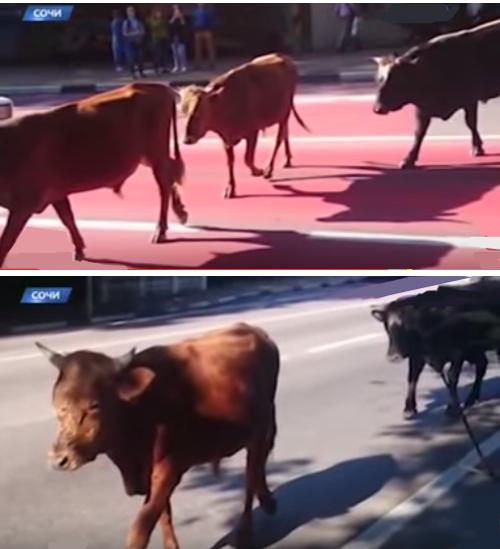 Ред буллы на дорогах Сочи 11 октября 2015.png