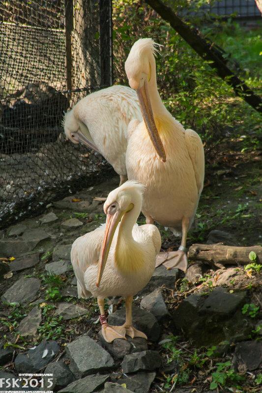warshaw_zoo-118.jpg
