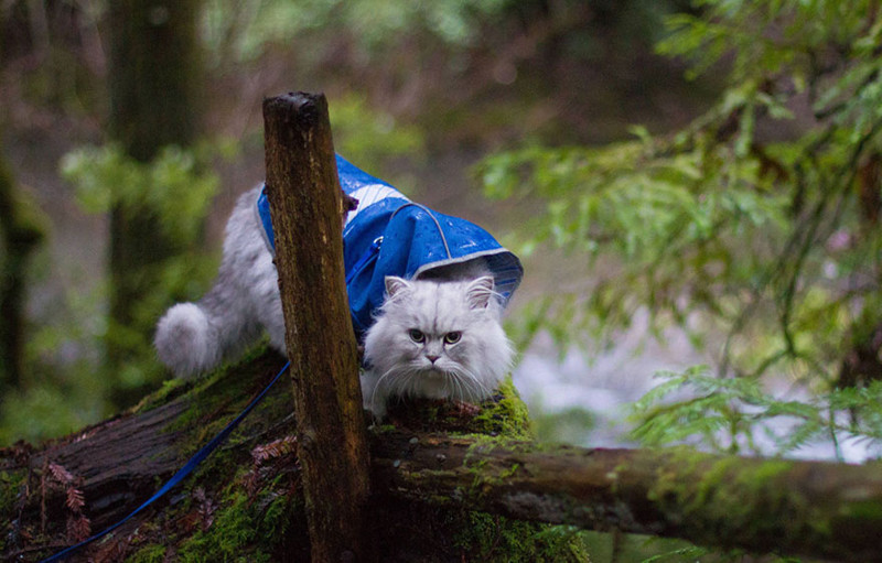 Кот Гэндальф, кот путешественник