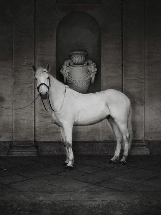 Фотограф и дизайнер Frank Uyttenhove