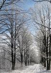зима-1.jpg