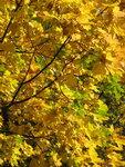 Осень-49.jpg