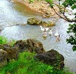 Утром, на реке... SAM_0634.JPG