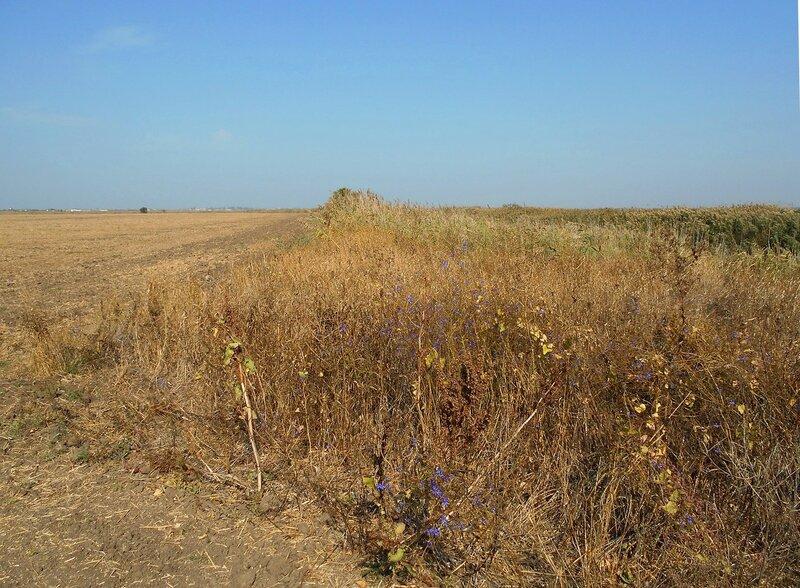 Осень, травы, поле ... DSCN1383.JPG