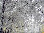 НЕ КОНКУРС!!! КОНКУРСНЫЕ РЯДОМ!                  1 Мая в Екатеринбурге. Деревья словно укутаны в оренбуржском пуховом платке!