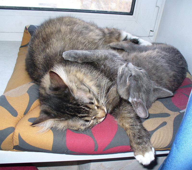 Кошки мои