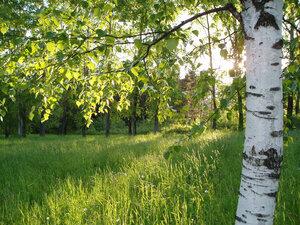 s:листопадные,s:деревья
