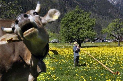 Switzerland Alphorn