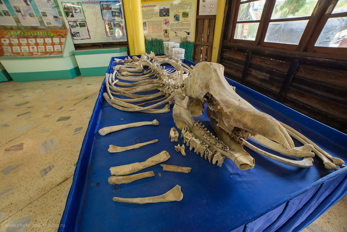 Фотография 19. Скелет в здании касс парка Сам Рой Йот у смотровой площадки Кхао Даенг. Отзывы туристов о самостоятельном отдыхе в Таиланде (100, 14, F=9.0, 0.6, камера Nikon D610, объектив Samyang 14/2.8, снято со штатива Sirui T-2204X-G20KX)