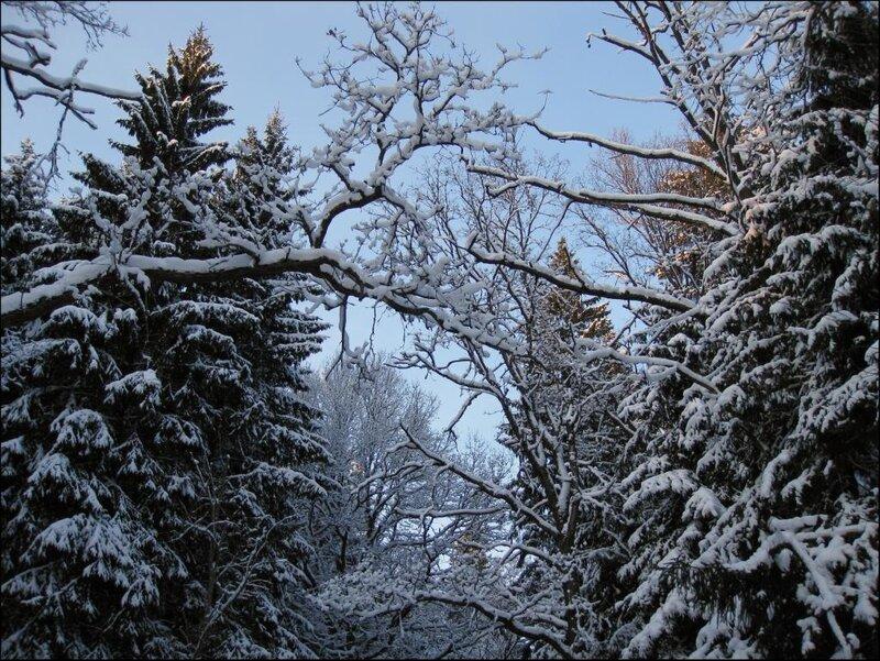 Узоры зимнего леса