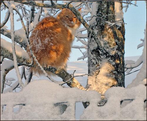 Что смотрите - кота на дереве не видели?