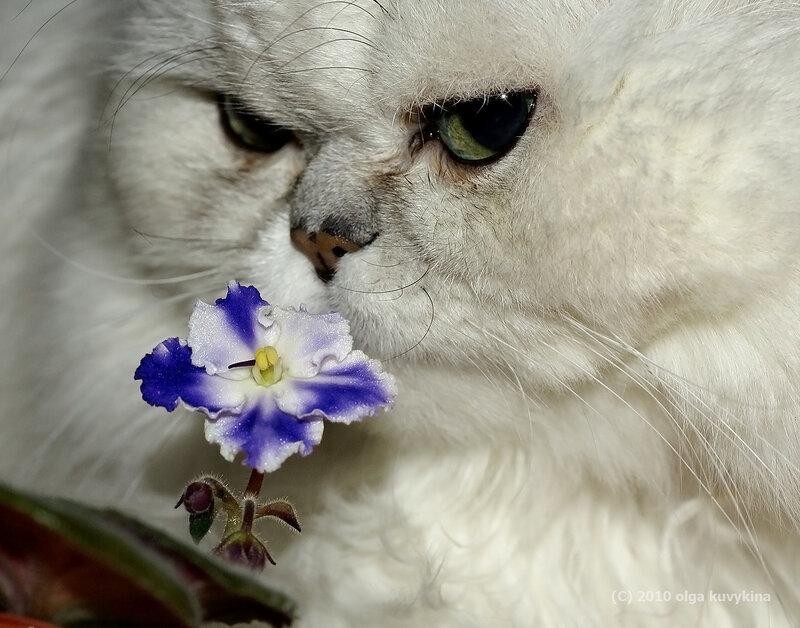 Сами нюхайте свой цветочек