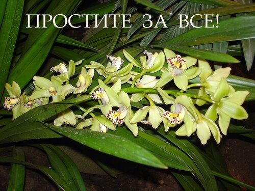 http://img-fotki.yandex.ru/get/4008/paulina67.4f/0_3af31_b597ebc8_L.jpg